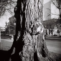 Tree (jeffreylcohen) Tags: holga film hp5 blackandwhite bw 120 portland oregon or