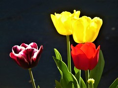 Flowers (KiranParmar) Tags: flowers colourful yellow red