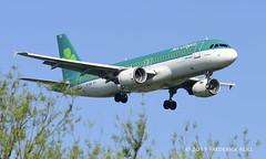 Aer Lingus A320 ~ EI-DEA (© Freddie) Tags: londonheathrow poyle heathrow lhr egll 09l arrivals aerlingus airbus a320 eidea fjroll ©freddie named fiedeilme stfidelma