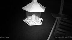 East (Roberts Texas Bird Feeder Cam) Tags: roberts quinlan texas txbird feeder cam camera 75474