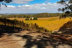 Pike & Joyce Vineyards, Lenswood, SA. (andrew52010) Tags: pikejoyce lenswood restaurant adelaidehills autumncolour vineyards winery mountloftyranges vineyard adelaide southaustralia