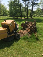 D93B5AED-F136-4537-92AA-0ED7E1623FEE (Lakeview Stump Grinding) Tags: lakeview columbia strongsville stump grinding ohio station north royalton cleveland berea olmsted falls landscaping bay village northeast service grind removal