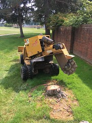 F2719701-1038-450F-8EB1-ACEB81362308 (Lakeview Stump Grinding) Tags: lakeview columbia strongsville stump grinding ohio station north royalton cleveland berea olmsted falls landscaping bay village northeast service grind removal
