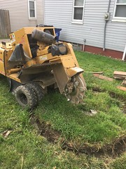 B170DBEE-CA24-4F3A-B859-CC8CDC596719 (Lakeview Stump Grinding) Tags: lakeview columbia strongsville stump grinding ohio station north royalton cleveland berea olmsted falls landscaping bay village northeast service grind removal