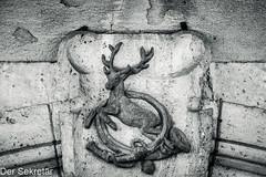 """Herzlich willkommen im """"Posthirschen"""" --- A warm welcome to our """"Posthirsch"""" (der Sekretär) Tags: detai deutschland eigenschaften germany hirsch horn posthorn pösneck relief stein thuringia thüringen tier abgeblättert abgebröckelt alt animal bröcklig deer old stone verwittert weatherbeaten weathered"""