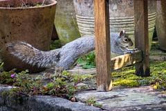 IMG_7136.jpg (Alex Meek) Tags: wildlife squirrel spring