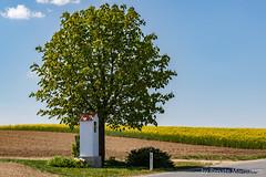 Unterwegs im Weinviertel .... (renate.marquardt) Tags: 2019 bildstock bäume felder landschaft materl niederösterreich rapsfeld strasen weinviertel