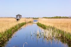 Naardermeer (Ralph Apeldoorn) Tags: naardermeer nature natuur natuurmonumenten netherlands rondjenaardermeer naarden noordholland nederland