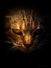 IMAG1553 (Firefly Ju) Tags: animal cat kitten pussycat cateye pet