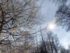Laarbeekbos : trees (foto_morgana) Tags: arbres aurorahdr2019 backlight belgië belgique belgium boisdelaerbeek bomen bos brussel brussels brusselshoofdstedelijkgewest bruxelles nature naturereserve natuur natuurreservaat on1photoraw2019 outdoor trees tegenlicht réservenaturelle reservanatural