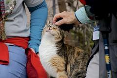Friendly Cat (oxfordblues84) Tags: capernaum capernaumisrael israel oat overseasadventuretravel touristattraction historicsite ruth traveler cat tourist woman
