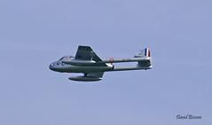 De Havilland DH 100 Vampire Fb 6 n° 624  ~ F-AZHX / 4-LH  VZ152 (Aero.passion DBC-1) Tags: 2006 meeting fertéalais dbc1 david biscove aeropassion avion aircraft aviation plane de havilland dh100 vampire ~ fazhx 4lh vz152