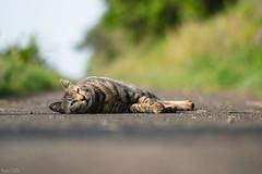 猫 (fumi*23) Tags: ilce7rm3 sony sel85f18 85mm fe85mmf18 a7r3 animal katze feline cat chat neko gato bokeh dof ソニー ねこ 猫 emount apsccrop