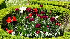 2019-04-22_13-50-45_ILCE-6500_DSC08785 (Miguel Discart (Photos Vrac)) Tags: 2019 52mm belgie belgique belgium bru brussels bruxelles bxl bxlove divers e2875mmf2828 fleurs flowers focallength52mm focallengthin35mmformat52mm ilce6500 iso100 parc park sony sonyilce6500 sonyilce6500e2875mmf2828