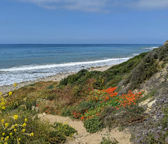 IMG_20190422_102316-19 (joeginder) Tags: jrglongbeach oceantrails pacific california beach rocky cliffs wildflowers hiking