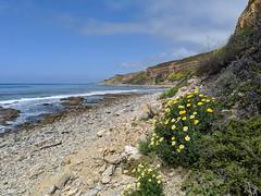 IMG_20190422_104009 (joeginder) Tags: jrglongbeach oceantrails pacific california beach rocky cliffs wildflowers hiking