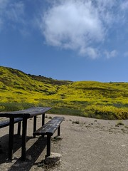 IMG_20190422_105246 (joeginder) Tags: jrglongbeach oceantrails mustard pacific california beach rocky cliffs wildflowers hiking