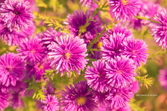 flowers (gwnam.2008) Tags: flower floral blossom bloom nature naturalbeauty colorful