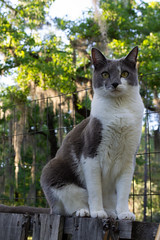nickels (jillian rain snyder) Tags: cat pet animal outdoors