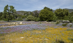 The Colorful Landscape (marlin harms) Tags: wildflowers indians