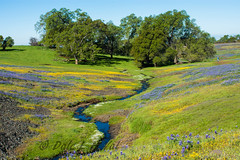 019_1594.jpg (dalelval) Tags: flowers tablemountain wildflowers
