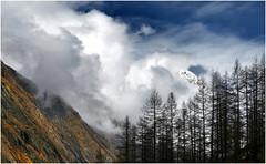 rapimento (art & mountains) Tags: alpi alps valdaosta cogne cielo respiro spazio larici tramite hiking parcogranparadiso natura silenzio contemplazione musica vision dream spirit armonia wind