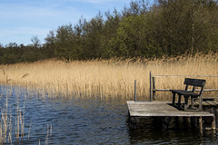 Just relax (bhermann.hamburg) Tags: schaalsee lake bank ruhe entspannung relaxation schilf reed ngc