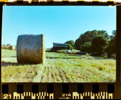 _DSC0128 (simonoga) Tags: analog nikon film color kodak nature art gold plus
