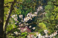 42 - Forbach en Avril 2019 (paspog) Tags: forbach lorraine france forêt wald forest woods bois printemps sping frühling avril april 2019