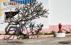'Hydra and Hydrant' (Canadapt) Tags: house tree fire hydrant shadow wall street geometry nafarros portugal canadapt