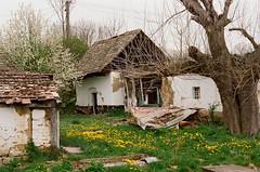 Vályogsors (sárkánymacska) Tags: olympus om2n zuiko 50mm 12 kodak pro image 100 vályog falu village