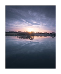 Swanlight (David Haughton) Tags: thames river susnet swan reflections calm still tranquil peaceful evening eynsham oxfordshire