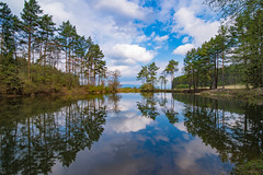 I know why the bear came here (Paul Wrights Reserved) Tags: landscape landscapes sky skyscape skyscapes cloud clouds cloudscape cloudscapes mirror mirrored mirrorimage reflection ref reflections reflectionphotography trees tree treescape treescapes composition leadinglines leading bear