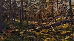 Woodland (catha.li) Tags: woodland skåne lgg4 spring soe naturewatcher sweden