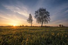 Birch sunrise (Sebo23) Tags: sunrise sonnenstrahlen sonnenstern sunstar light landschaftsaufnahme landschaft landscape landscapephotography natur naturaufnahme canoneosr canon16354l