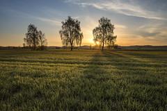 tree sunrise (Sebo23) Tags: sunrise sonnenstrahlen sonnenaufgang sun licht morgenlicht morning morninglight gegenlicht landschaft landscapephotography landschaftsaufnahme naturaufnahme natur nature canoneosr canon16354l