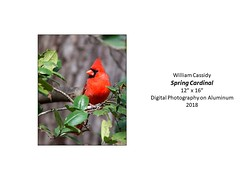 "Spring Cardinal • <a style=""font-size:0.8em;"" href=""http://www.flickr.com/photos/124378531@N04/33801388098/"" target=""_blank"">View on Flickr</a>"
