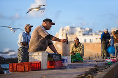 Fish Seller (Ash and Debris) Tags: africa guy market morocco street people birds city knife citylife streetlife fishmarket man urban trader dealer urbanlife bird essaouira seller seagull men seaside
