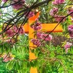 orange cross thumbnail