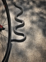 Cycling Adventure (Saved by Grace (100% God, 0% Me)) Tags: biketour cyclingtour gcninspiration louisville kentucky louisvillebicycleclub backroads trek countryside cyclingexplorers green spring parklandsoffloyldsfork snake animal reptiles