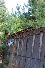 Bogensee_(CP) - 381 (sigkan) Tags: deutschland brandenburg bogensee lostplaces nikoncoolpixp520 vondetkanaccount