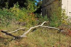 Bogensee_(CP) - 337 (sigkan) Tags: deutschland brandenburg bogensee lostplaces nikoncoolpixp520 vondetkanaccount