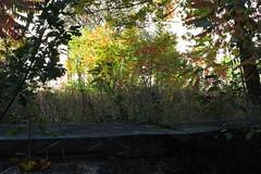 Bogensee_(CP) - 330 (sigkan) Tags: deutschland brandenburg bogensee lostplaces nikoncoolpixp520 vondetkanaccount