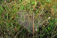 Bogensee_(CP) - 316 (sigkan) Tags: deutschland brandenburg bogensee lostplaces nikoncoolpixp520 vondetkanaccount