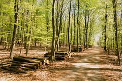Green is the hope (Zoom58.9) Tags: trees way path wood forest leaves europe germany niedersachsen cuxland bäume weg holz wald blätter europa deutschland green grün sony mood stimmung nature natur landscape landschaft outside draussen