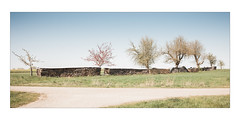 Family Trees (Thomas Listl) Tags: thomaslistl color nature field 35mm sky blue trees wood grass countryside landscape 16x7 panorama path light bright ngc