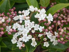P1060393 (jesust793) Tags: flores flowers naturaleza nature primavera spring