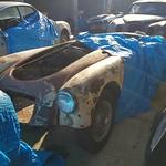 MGA & Jags for restoration thumbnail