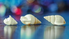 Trio - 6720 (ΨᗩSᗰIᘉᗴ HᗴᘉS +57 000 000 thx) Tags: trio bokeh sea seashell coquillage macro belgium europa aaa namuroise look photo friends be yasminehens interest eu fr party greatphotographers lanamuroise flickering