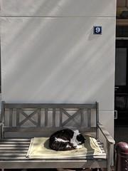 Amsterdam cat #9 (hudson) Tags: 9